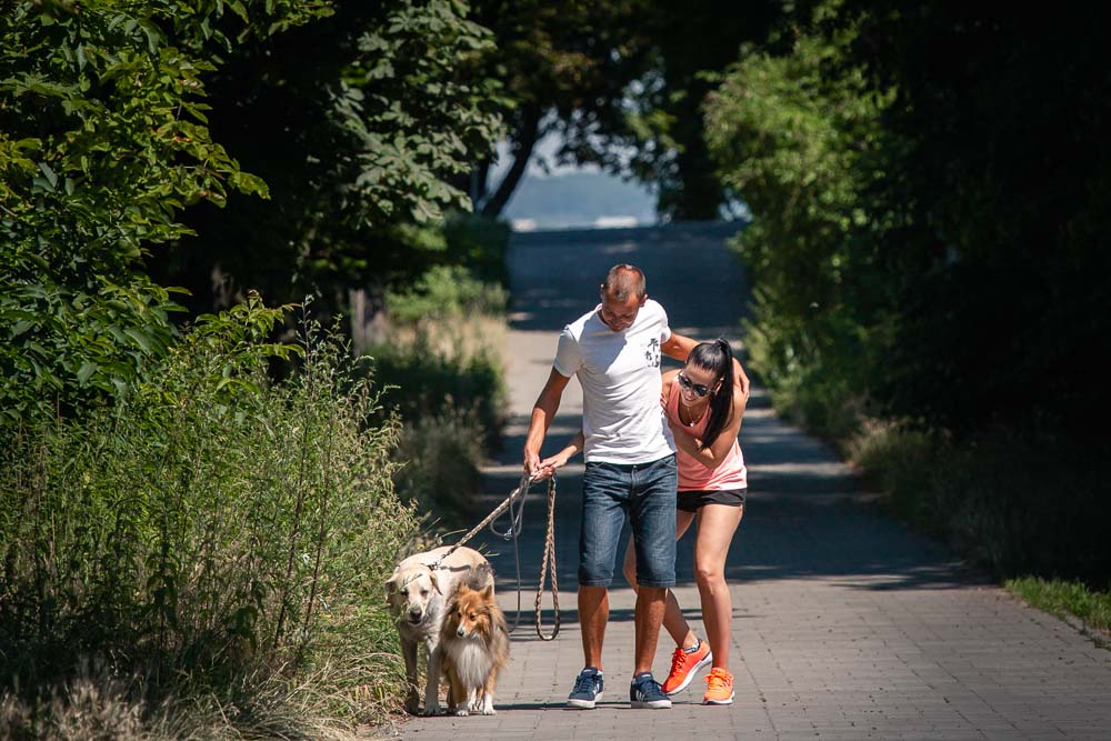 Na vycházce se psi na cestě.