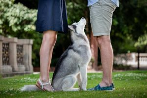 Pes hledí nahoru mezi nohami snoubenců.