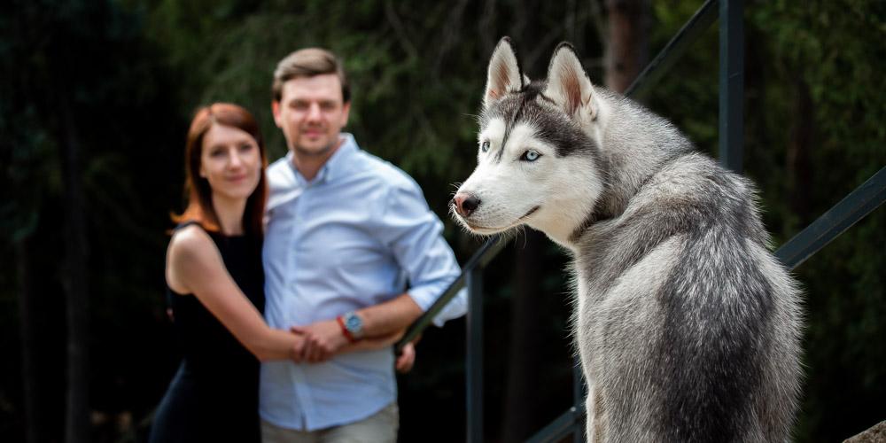 Snoubenci v objetí na předsvatebním focení a husky pes.