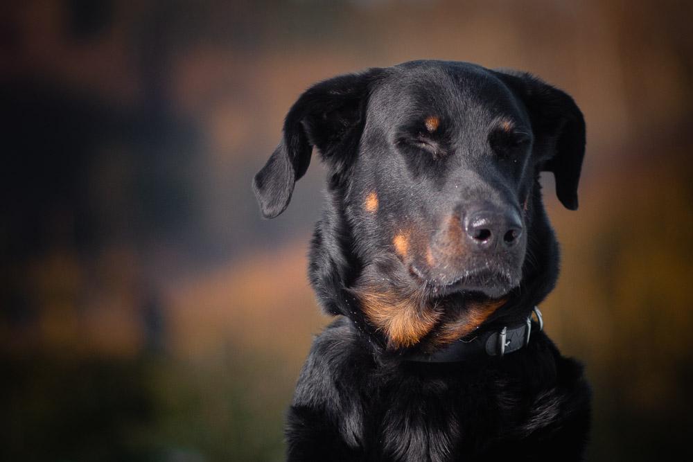 Portrétní fotografie hlavy psa.