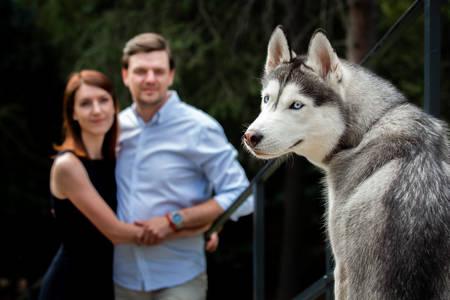 Pes se snoubenci na vycházce.